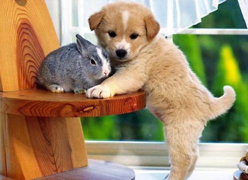 Bài viết tiếng Anh về sở thích nuôi động vật
