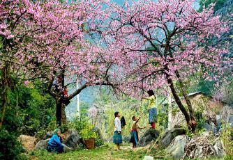 Những từ vựng tiếng Anh về mùa xuân