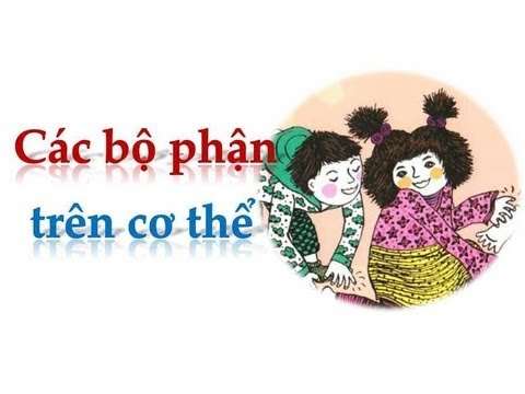 ten-goi-cac-bo-phan-co-the-nguoi-bang-tieng-anh